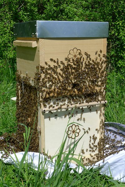swarms_rh_box4.jpg (88205 bytes)